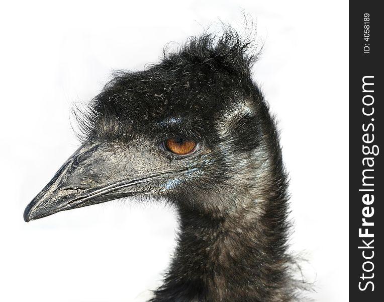 Emu Head