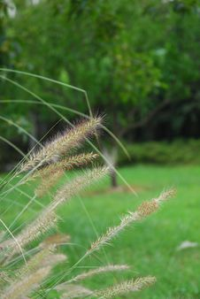 Free Grass And Trees Royalty Free Stock Photos - 4061258
