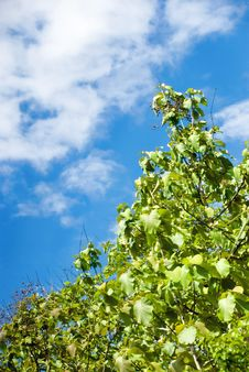 Free Green Bush With Blue Sky Royalty Free Stock Image - 4062736
