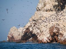 Free Wildlife On Islas Ballestas In Peru Royalty Free Stock Photo - 4062955