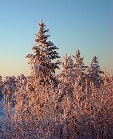 Free Winter07 Royalty Free Stock Image - 4063086
