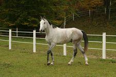 Free Gray Stallion III Stock Photo - 4063280