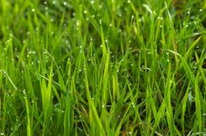 Free Green Grass Spring Royalty Free Stock Image - 4063856