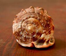 Free Seashell Royalty Free Stock Photography - 4063977