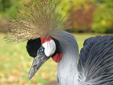Free Exotic Bird Royalty Free Stock Image - 4064816