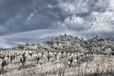 Winter Vineyard In Infrared Royalty Free Stock Photography
