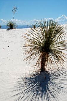 Free White Sands National Park Stock Photography - 4065632