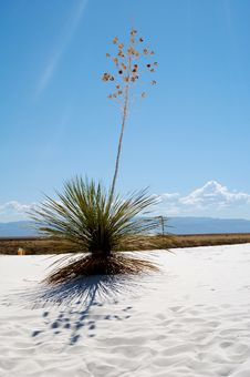 Free White Sands National Park Stock Photos - 4065633