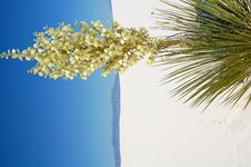 Free White Sands National Park Royalty Free Stock Image - 4065636