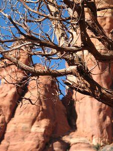 Shaggy Bark Sedona- Gin Tree Royalty Free Stock Photography