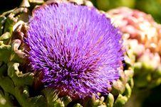 Free Artichoke Flower Stock Photo - 4066820