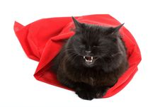 Free Cute Black Cat In A Red Bag Isolated Stock Photos - 4067343