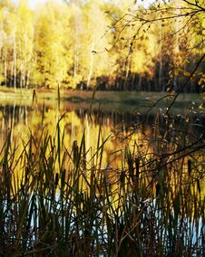 Free Autumn Pond Royalty Free Stock Image - 4068246