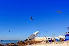 Morocco, Essaouira: Seagulls In The Harbour Royalty Free Stock Image