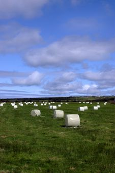 Free Field Of Bales Ii Stock Photos - 4069733