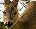 Free Deer Animal Royalty Free Stock Photos - 4071858