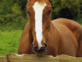 Free Horse Eating Fence Stock Images - 4073834