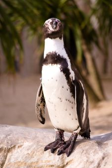 Free Penguin 3 Royalty Free Stock Photo - 4070625