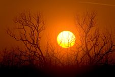 Free Sunrise Over Tree Branches Royalty Free Stock Photography - 4071687
