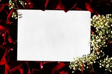 Free White Paper Over Red Petals Royalty Free Stock Photography - 4072527