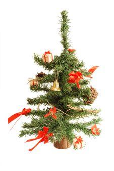 Free Little Christmas Tree Royalty Free Stock Photo - 4073045