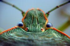 Free Bug Stock Photography - 4073322
