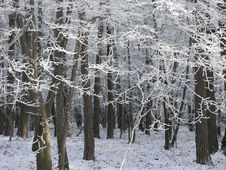 Free Winter Forest Stock Image - 4075521