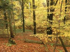 Free Autumn Forest Royalty Free Stock Photography - 4076767