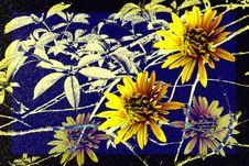Free Yellow Chrysanthemums Stock Image - 4077551