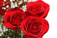 Free Bunch Of Roses Royalty Free Stock Photos - 4077778