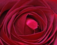 Free Bunch Of Roses Stock Photo - 4077780