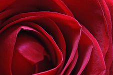 Free Bunch Of Roses Stock Image - 4077781