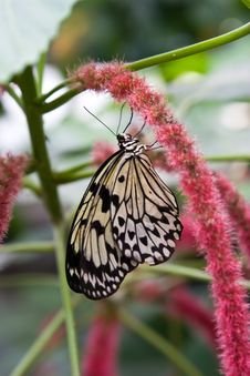 Free Rice Paper Butterfly Stock Photos - 4079263