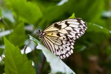 Free Rice Paper Butterfly Royalty Free Stock Photo - 4079275