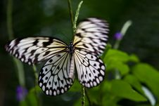 Free Rice Paper Butterfly Stock Image - 4079291