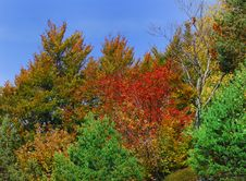 Free Colourful Trees Stock Photography - 4079472