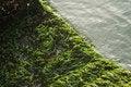Free Moss Stock Photos - 4081883