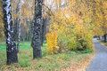 Free Birch Trees Alley In The Autumn Stock Photos - 4082063