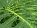 Free Background Green Leaf With Holes Stock Photos - 4082943