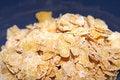 Free Cereal Closeup Stock Photos - 4087853