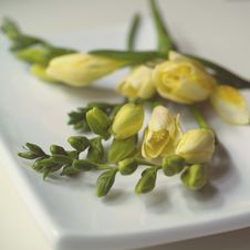 Studio Shot Of Flower Stock Image