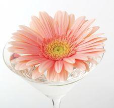 Studio Shot Of Flower Stock Photos
