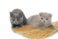 Free Two Small Kitties Royalty Free Stock Photos - 4081598