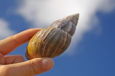 Large Snail In Woman S Hand Stock Photo