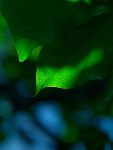 Free Green Leave Stock Photo - 4082310