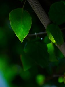 Free Green Leave Stock Image - 4082381
