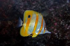 Free Colorful Fish Swimming In The Aquarium Stock Images - 4083524