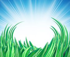 Free Summer Background With Grass Stock Photo - 4084630