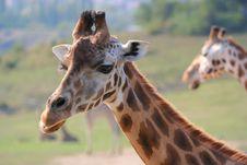Free Giraffe S Head Stock Image - 4084911