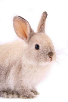 Free A Rabbit Stock Photos - 4085183